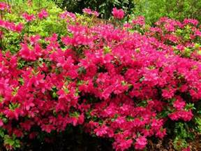 pin by donna kresge on zone 5 flowers pinterest