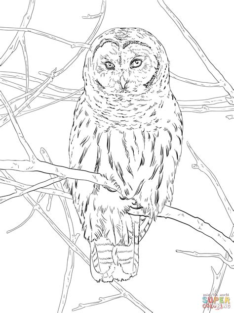 spotted owl coloring page hoot owl coloring page free printable coloring pages
