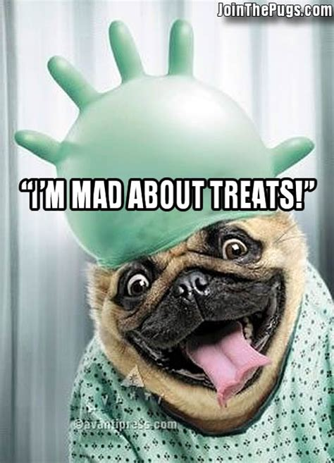 pug i you pug mad join the pugs
