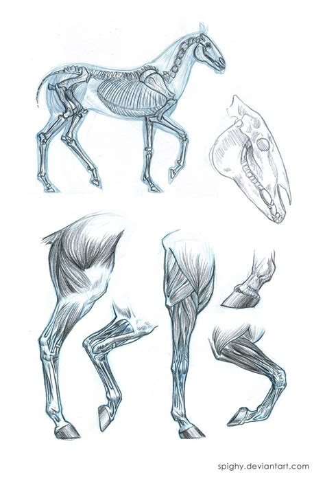 Sketches H by Anatomy Sketches By Spighy On Deviantart