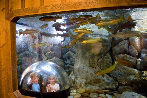 aquarium design by michael newcastle business blends art science in aquarium design