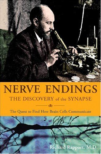 nerve endings  discovery   synapse  richard rapport