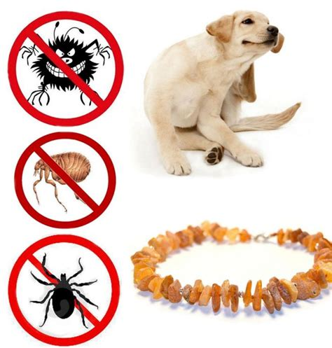 best flea and tick prevention for dogs flea and tick for dogs cats pet medication kilcona park club kilcona park