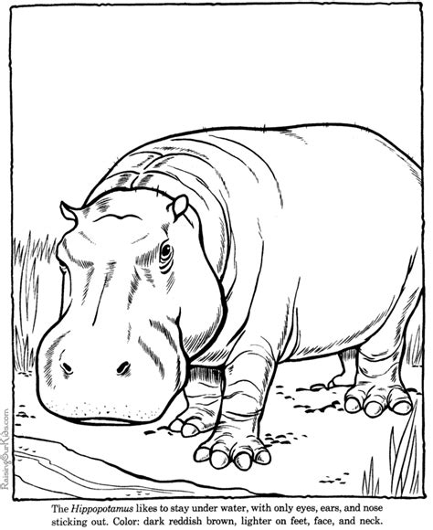 printable animal drawings hippopotamus 27 animals printable coloring pages