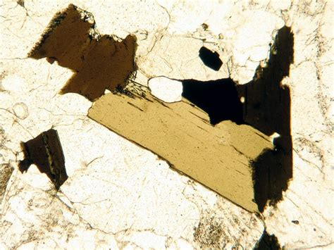 biotite under thin section igneous minerals