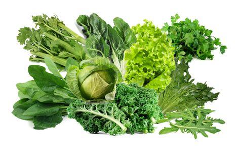 imagenes de hojas verdes comestibles calendario de siembra en m 233 xico mae