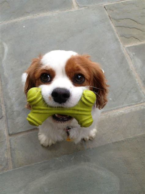 cute puppy pictures  pics amazing creatures