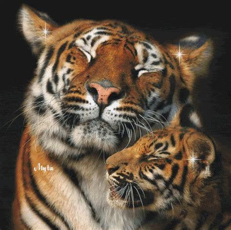 minicuentos de tigres y tigres im 225 genes con brillos