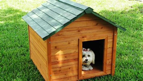 how to build a dog house how to build a dog house