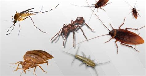 Suntikan Semprot Racun Pembasmi Kecoa cara mengusir serangga semut nyamuk kecoa di rumah kumpulan tips cara