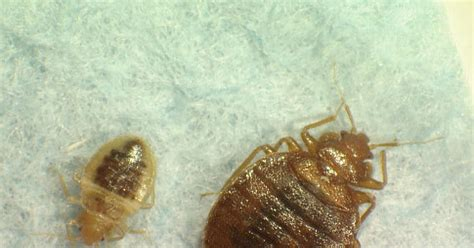 bed bug attorney bed bug attorney 28 images bed bug lawyer in md va dc