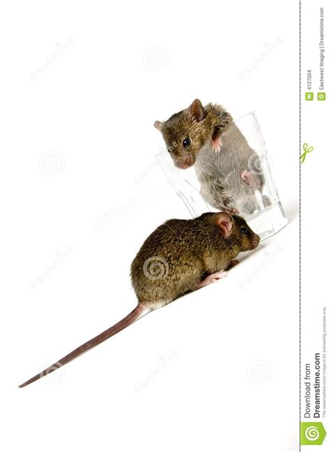 mouse for glass mice in glass stock photo cartoondealer com 4126980