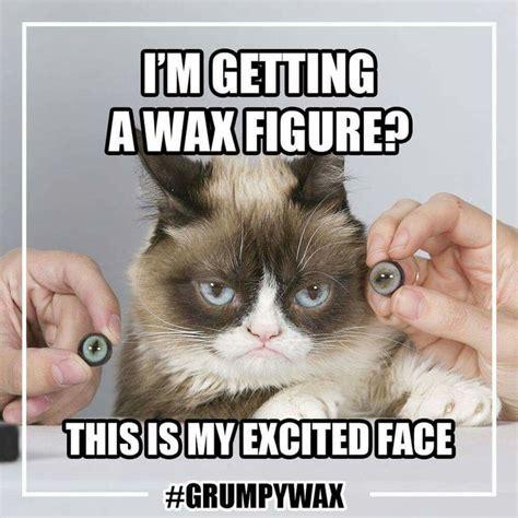 To Kill A Mockingbird Cat Meme - grumpy cat and wax grumpy cat pinterest more grumpy