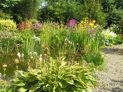 Bog Garden by Bog Garden Grows On You