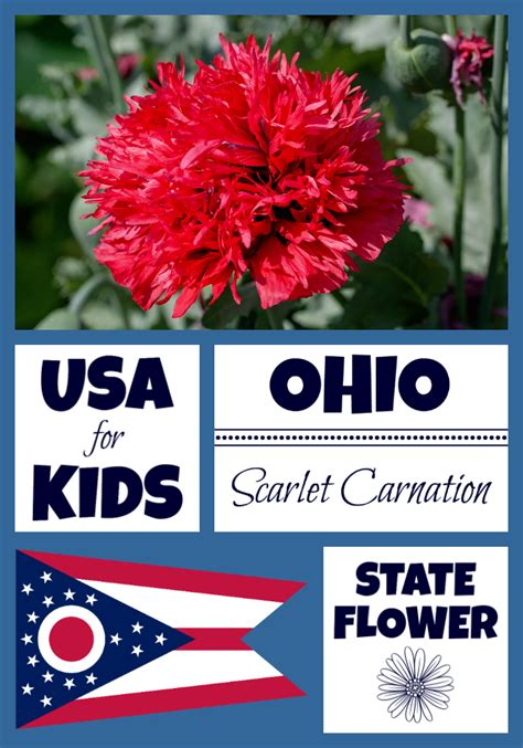 what is ohio state flower flowers ideas for review