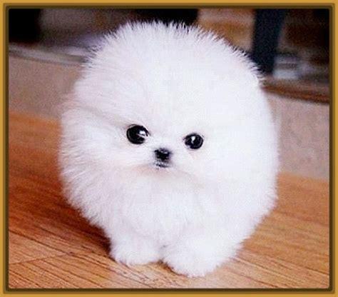 imagenes de animales bonitos imagenes de perros pitbull seotoolnet com