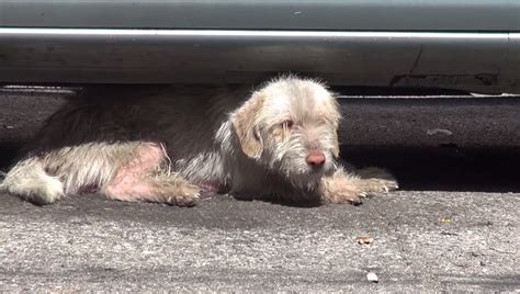 puppy sick after sick saved after 7 months living cars dogtime