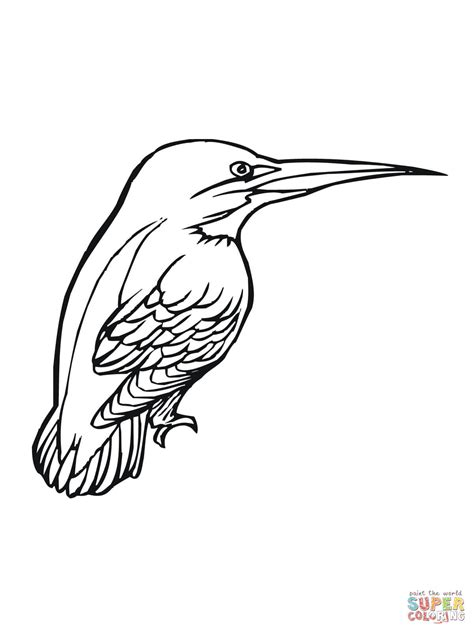 coloring pages kingfisher kingfisher bird coloring online super coloring