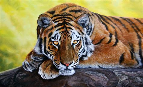 Painting Tiger tiger painting for sale how to draw and paint animals wildlife pastel pencil and