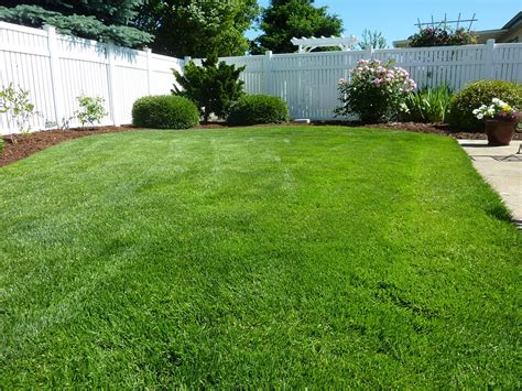 backyard at the w free photo back yard grass vinyl fence free image on