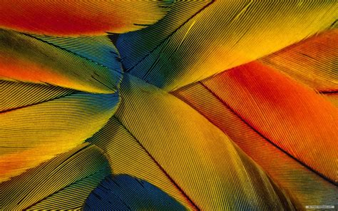 bird feather wallpaper wallpapersafari