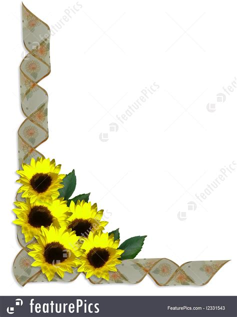 illustration  sunflowers floral corner design ribbons