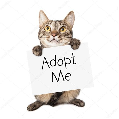 where to adopt a near me cat carrying adopt me sign stock photo 169 adogslifephoto 39975387