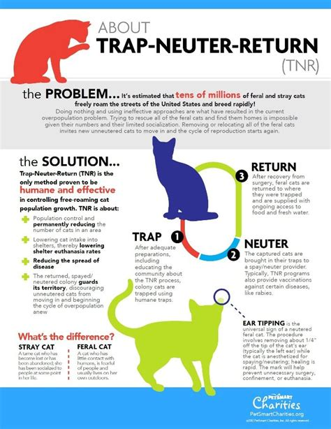 Trap Neuter Return 20 best images about t n r on cats feral cat
