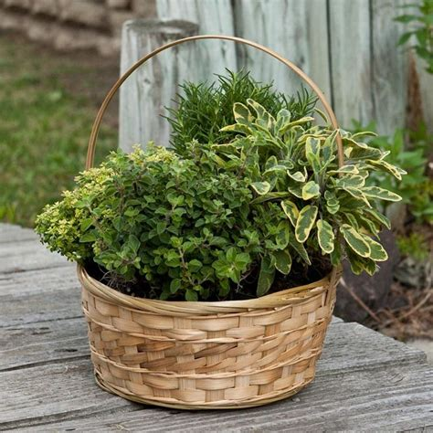 Herb Garden Planter Container by Herb Container Gardens