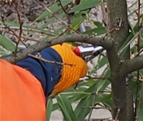 Wann Ist Der Baumschnitt Erlaubt Proplanta De