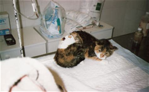 uremia y creatinemia dialisis en caninos y felinos hemodialisis dialisis