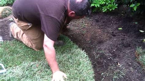 semina tappeto erboso tappeto erboso prato come realizzare un tappeto erboso