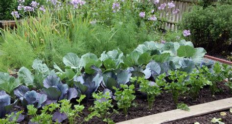 City Vegetable Garden Florida Sues City For Banning Vegetable Gardens