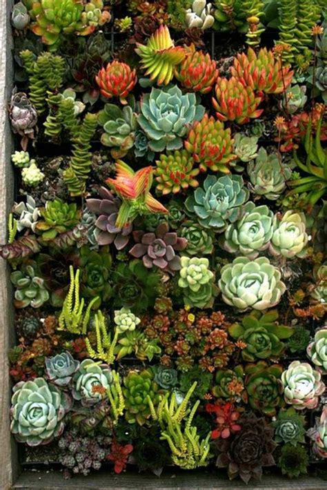 Cactus Vertical Garden 60 Beautiful Garden Ideas Garden Pictures For Garden