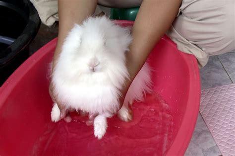 Bak Mandi Bayi Kuku my pets cara membersihkan kelinci