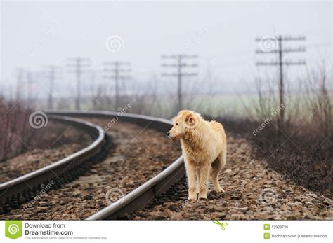 lonely puppy lonely royalty free stock images image 12923739