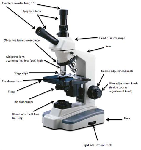 the compound light microscope worksheet compound light microscope worksheet quotes