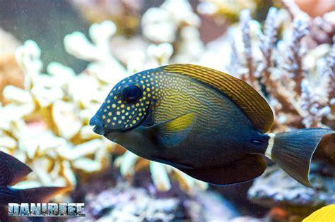 alimentazione dei pesci pesci e colori una dieta varia per il loro benessere
