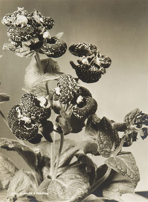 di fiore fotografo studio di fiore ca 1930 fotografia asta 115