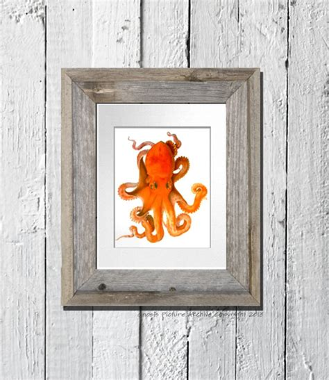 orange wall decor orange octopus wall print great as room or