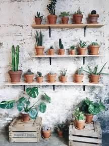 indoor cactus garden ideas  display  collection