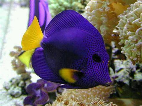 exotic saltwater fish tropical fish pinterest salts