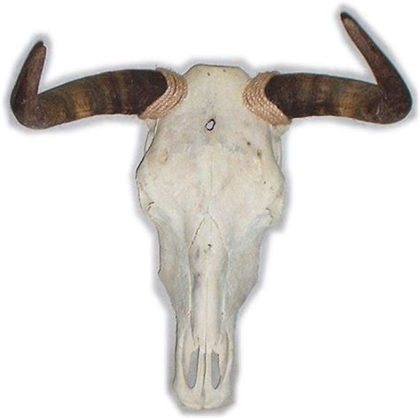 cow skull hand painted cow skulls