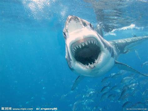 baby shark hd 鲨鱼摄影图 海洋生物 生物世界 摄影图库 昵图网nipic com