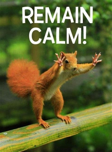 Remain Calm Meme - remain calm the weekend is here funny pinterest
