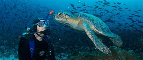 dive galapagos the best places to dive in america