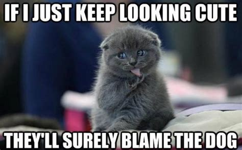 10 funny cat memes 2015 cute cat pictures photos pics
