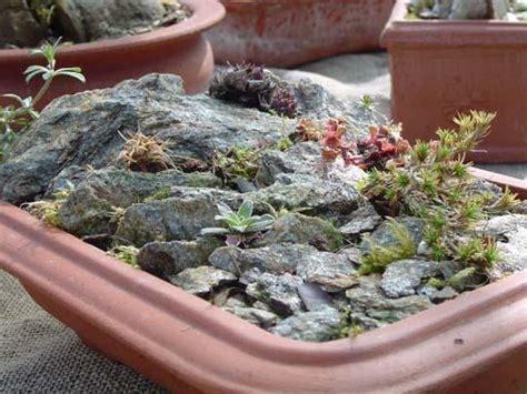 giardini zen in miniatura giardino in miniatura in un piatto coltivare e viaggiare