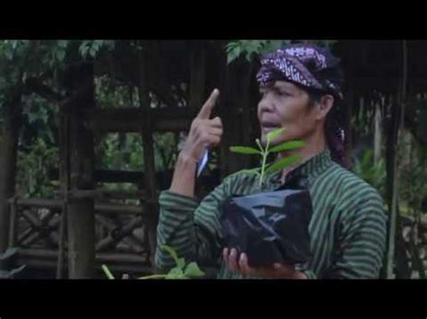 Nature Stek Dewo cara baru stek bibit durian musang king dll by dewo