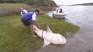Bull Shark Caught in River   River Monsters   Animal Planet